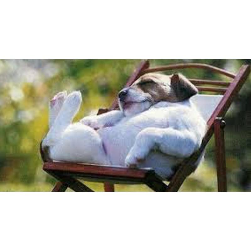 Zen ways to manage dog stress