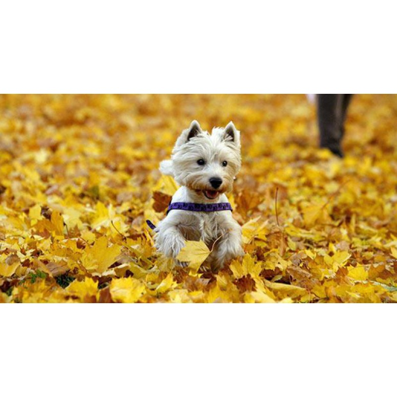 How to enjoy Autumn with your pooch